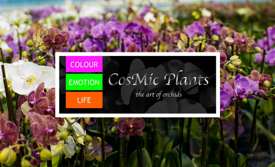 Petals & Plates – CosMic Plants Inc.