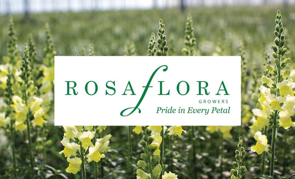 Petals & Plates – Rosa Flora Limited