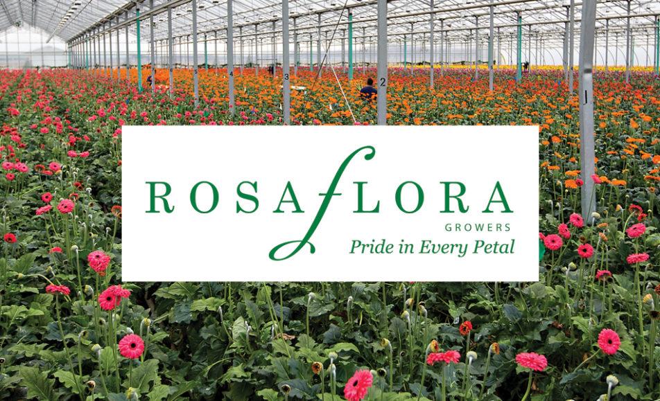 Petals and Plates – Rosa Flora